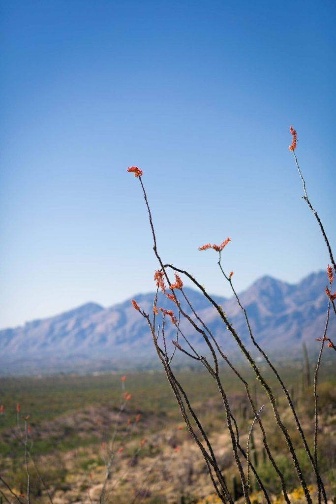 Photos from a recent visit to Tucson, Arizona and Saguaro National Park, and thoughts on the travel narrative in blogging. SavorySimple.net