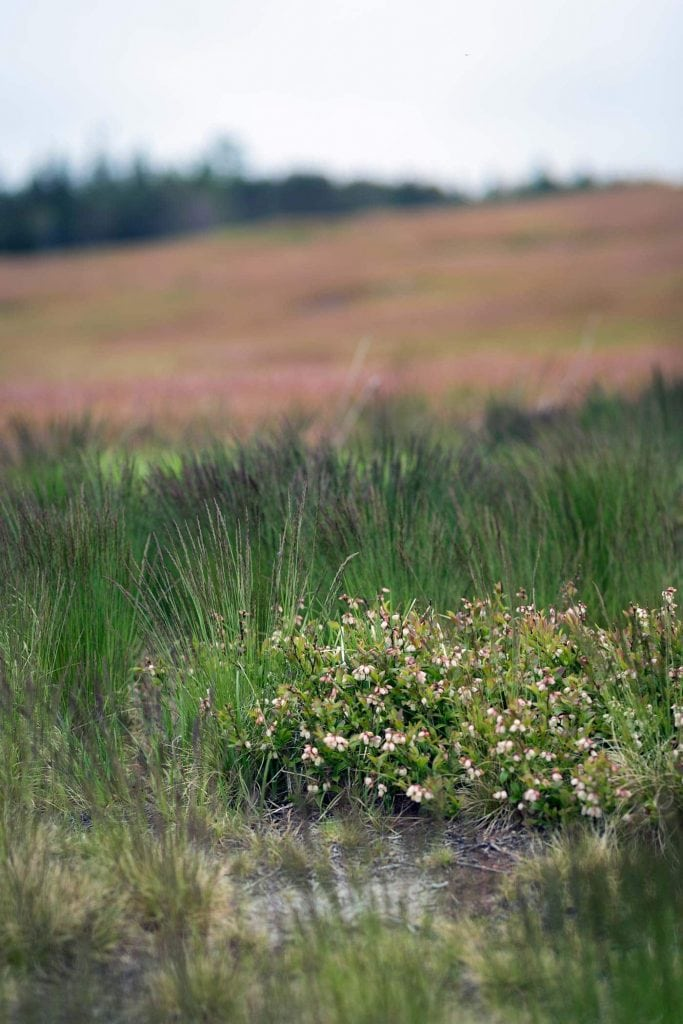Prince Edward Island - Wyman's of Maine - SavorySimple.net