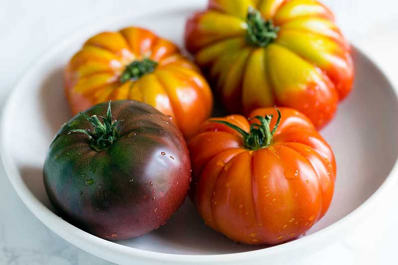 Four heirloom tomatoes of assorted colors in a white bowl.