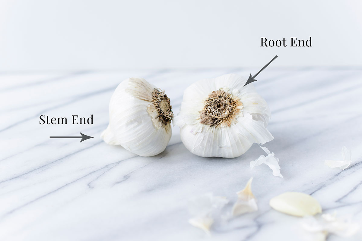 Garlic Stem end and Root end diagram